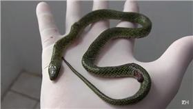 蛇,毒蛇/翻攝自ZHTV