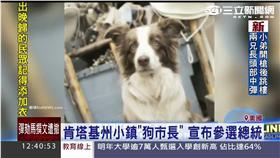 狗市長 新聞畫面