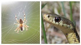 蛇,蜘蛛/合成圖David Amsler、Dwight Sipler,flickr cc