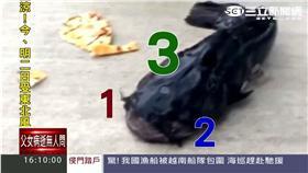 當「天使」比考大學還難!500超模搶44內衣秀名額 是異象還是汙染?紐約釣客驚遇「三眼鯰魚」還說想吃吃看!
