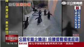 「馬達加斯加」翻版!丹麥企鵝大逃亡