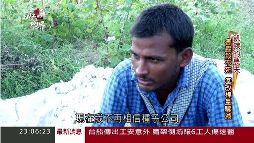 基改神話破滅!印度棉農看不見未來│三立新聞台
