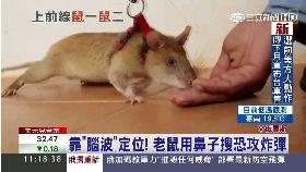 老鼠抗恐攻1100