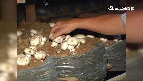 a毒蘑菇謠言2400