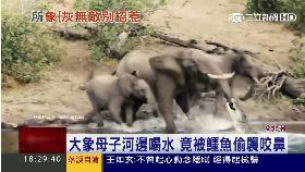 大象鬥鱷魚1700