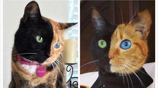 ▲圖/翻攝自Venus the Two Face Cat臉書