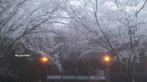零下3度急凍! 宜蘭太平山霧淞上枝頭