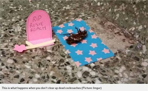 蟑螂-圖/翻攝自《地鐵報》