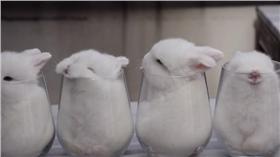 小白兔-圖/翻攝自ekdikisis YouTube