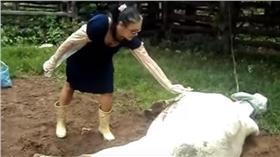 被母牛踢飛-圖/翻攝自nancyyoungkay YouTube
