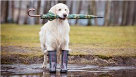 下雨、鋒面、雨天、天氣-blue(Shutterstock/達志影像)