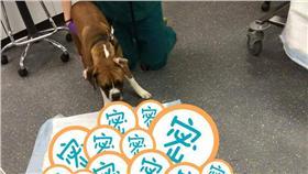 狗吃巧克力-圖/翻攝自Greenbrier Emergency Animal Hospital臉書
