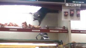 浣熊偷甜圈G1200