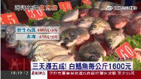 快要沒魚吃1800
