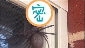蛛蜂-圖/翻攝自《每日郵報》