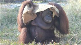 圖/翻攝自壽山動物園臉書