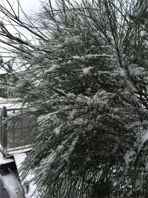 觀音山下雪_PTT