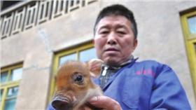 野豬,小豬/翻攝自貴州都市網