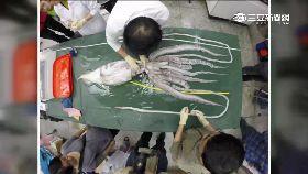 台捕大王魷1800