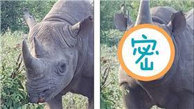 犀牛送飛吻-圖/翻攝自《每日郵報》