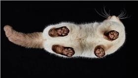 貓咪/Andrius Burba臉書專頁