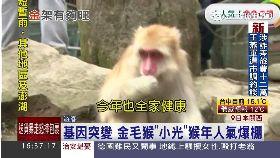 日本拜金猴1600
