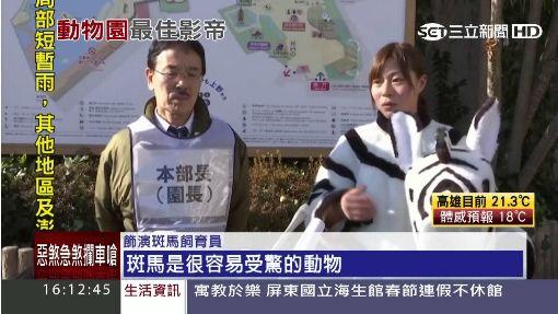 斑馬逃走中 !上野動物園演習超逼真