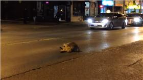 浣熊(圖翻攝自YouTube)