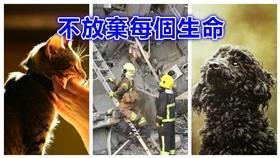地震,強震,救援,動物,毛小孩,寵物▲合成圖/達志影像、資料照