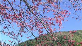 天氣,氣象,走春,櫻花,鋒面,溫差▲圖/記者施佩儀攝影