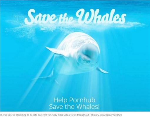 鯨魚,A片,募款▲圖/翻攝自INDEPENDENT