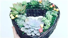 多肉植物-翻攝自多肉植物小星球「Succulent's Planet 」臉書