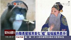 世界最怪猴1800
