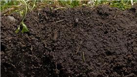 土、土壤/flickr-Natural Resources Conservation Service Soil Health Campaign/https://www.flickr.com/photos/87743206@N04/8053614949/in/photolist-dgET9a-fEki5c-9ohvUW-9iPPLW-77LK5N-9iPPxm-fEBSXb-dkjqds-dgETYd-bVfVvF-dgEWqj-bnTN1k-o7kPym-eYvaC8-rUVfBz-dS2f5G-9kTo1h-qLmxyr-fEdzQt-fEvaF1-fEvb2o-9rtg9v-fEz9xd-9tNMne-h8dJZ9-9kQjae-o6xdBP-nPYCU7-gge2Nu-h4Wf1L-h4XtzQ-nYijY3-bXrwzC-fEz9oC-8t9w3q-f8upSC-bMjCua-fEz9d5-nHtHyg-gjUfUJ-h8dCDc-fPQmMY-8Lq63V-nTvfXF-7cE9Ev-nP6DR6-o3h5MZ-9rtfec-7cJ3h9-7YPjos