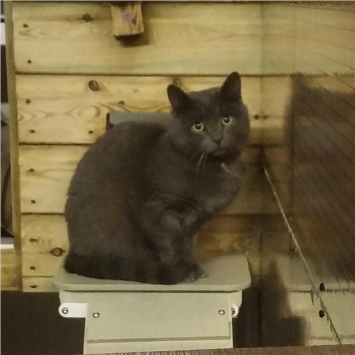 貓,KiwiJean,http://imgur.com/a/Ps1ti