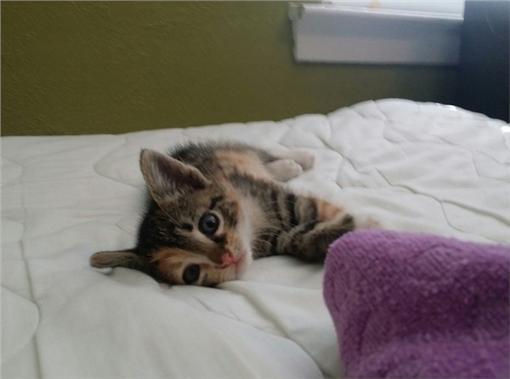 貓,matt-383,http://imgur.com/vjCbCY0