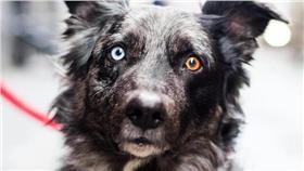 攝影師在紐約街拍特別的狗狗 https://www.instagram.com/thedogist/