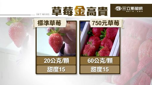 大湖草莓量產 推頂級版8顆要價750元