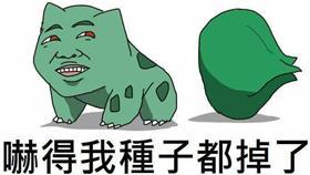 王怡豐/妙蛙種子