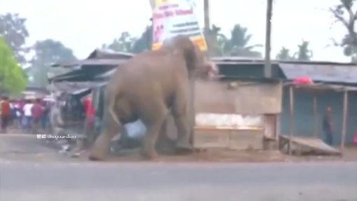 """進擊的大象! 抓狂暴走象鼻""""甩飛轎車"""""""