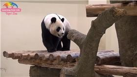 圓圓,貓熊,台北市立動物園,youtube