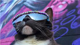 天生沒有眼皮的貓咪戴太陽眼鏡 https://www.instagram.com/sunglasscat/