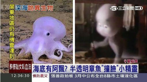 海底有阿飄? 夏威夷海底驚見半透明章魚