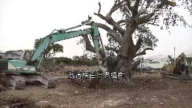開發移老樹1800