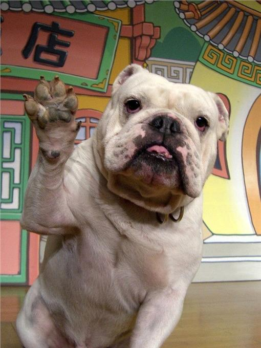 狗狗猩猩大冒險/圖/阿蘇卡德利動物樂園臉書