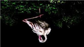 索尼世界攝影獎,台灣攝影師王泰然以一幀紅鶴照片,獲得台灣國家首獎。(索尼世界攝影獎提供 )中央社記者黃貞貞倫敦傳真
