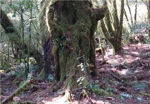 林管處、動物、雕像、宗教器物(圖/翻攝自台東林區管理處)http://taitung.forest.gov.tw/ct.asp?xItem=77875&ctNode=2323&mp=350