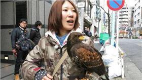 日本東京澀谷用老鷹驅趕當地過多的烏鴉 http://www.itmedia.co.jp/news/articles/1603/17/news136.html