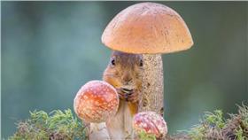 瑞典攝影師的夢幻松鼠系列 http://www.diyphotography.net/adorable-photos-of-squirrels-in-a-backyard-studio/