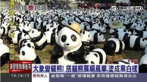 快閃紙貓熊到泰國 大象被迫塗黑白模仿